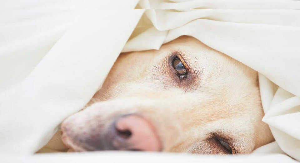 hund-magendrehung
